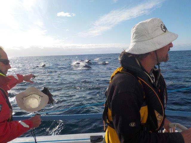 RSHYR Dolphins